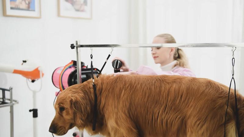 SF-804 Pet grooming table USES video